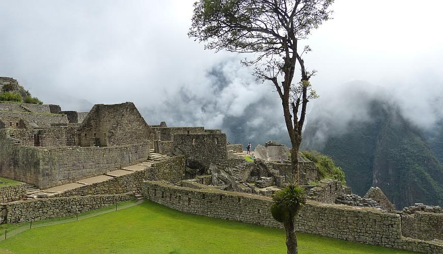Pisonay, Machu Picchu