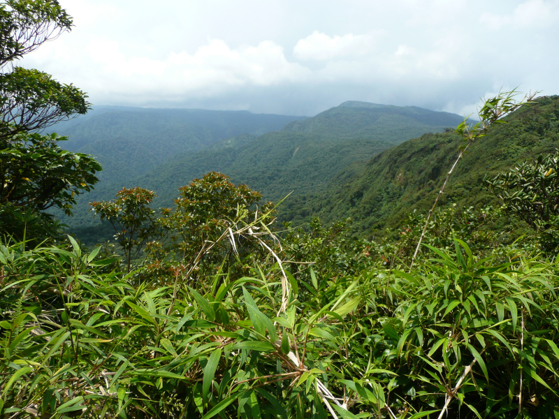 Cerro Amigo im Monteverde Regenwald Costa Rica, Reiseinformationen Costa Rica