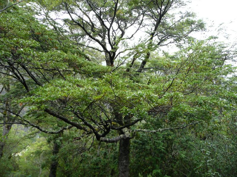 Vegetation in Chiloé, Chile