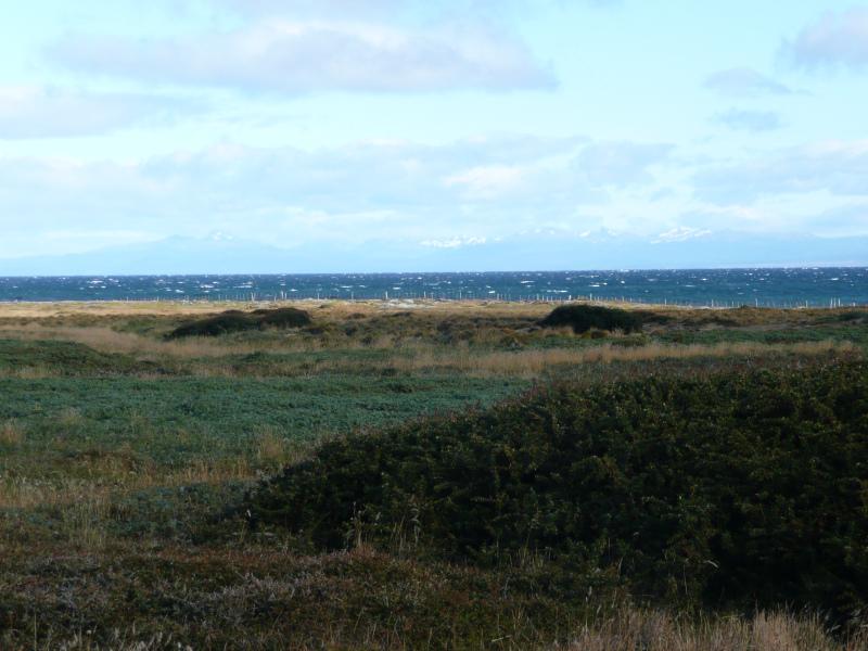 Seno Otway, Punta Arenas, Patagonien, Chile