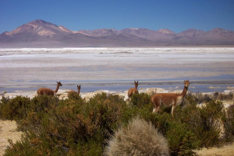 Salar de Surire, Putre, Chile
