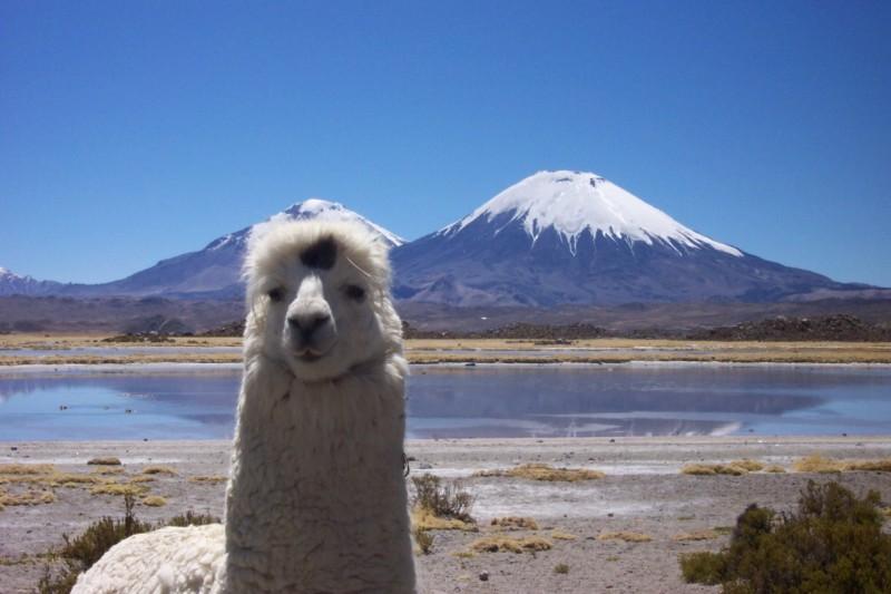 Tierwelt von Putre, Chile
