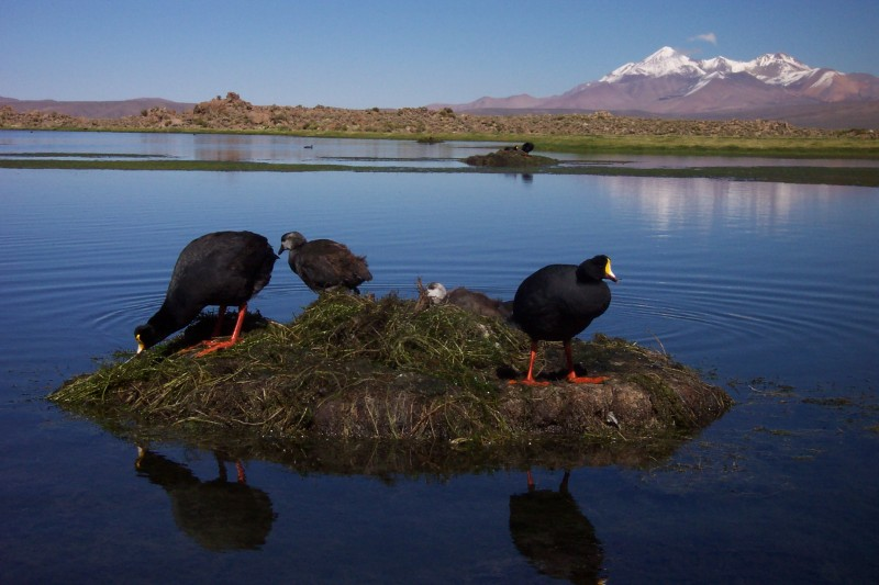 Lauca Nationalpark, Putre, Chile