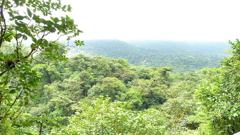Regenwald Tenorio Regenwald, Costa Rica