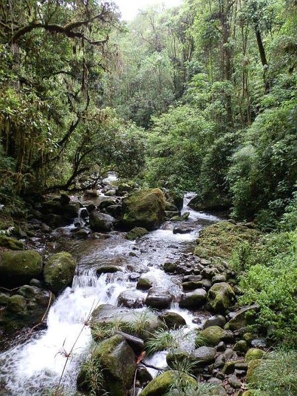 Natur in der Region San Gerado de Dota, Costa Rica