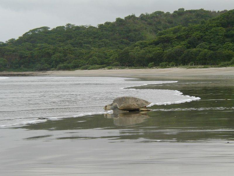 Playa La Flor, San Juan del Sur, Nicaragua