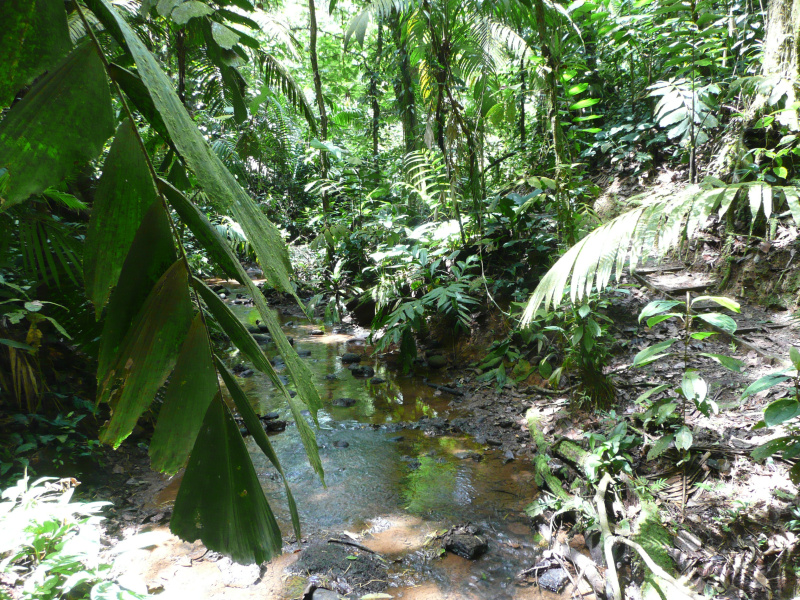 Tirimbina Regenwaldreservat, Costa Rica