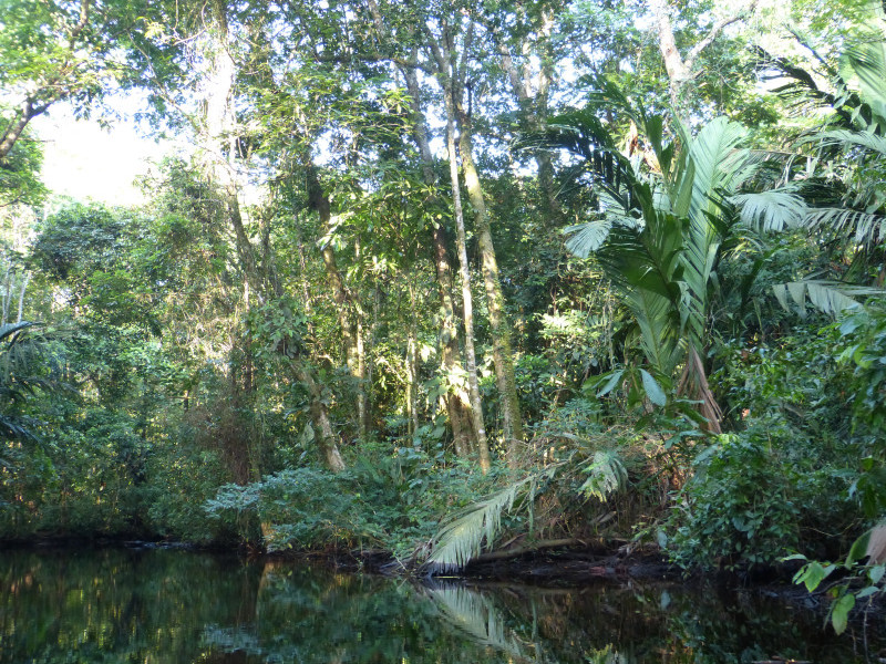 Kanal im Nationalpark Tortuguero, Costa Rica