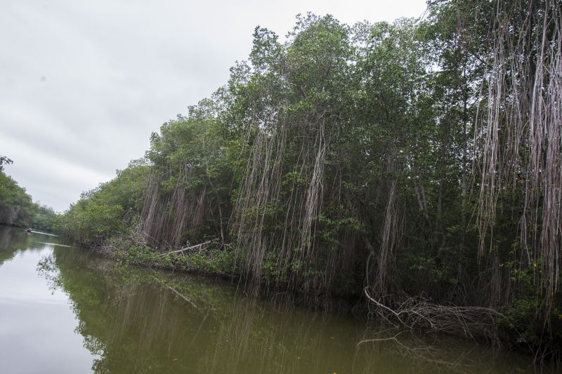 Mangrovenwälder, Tumber, Peru