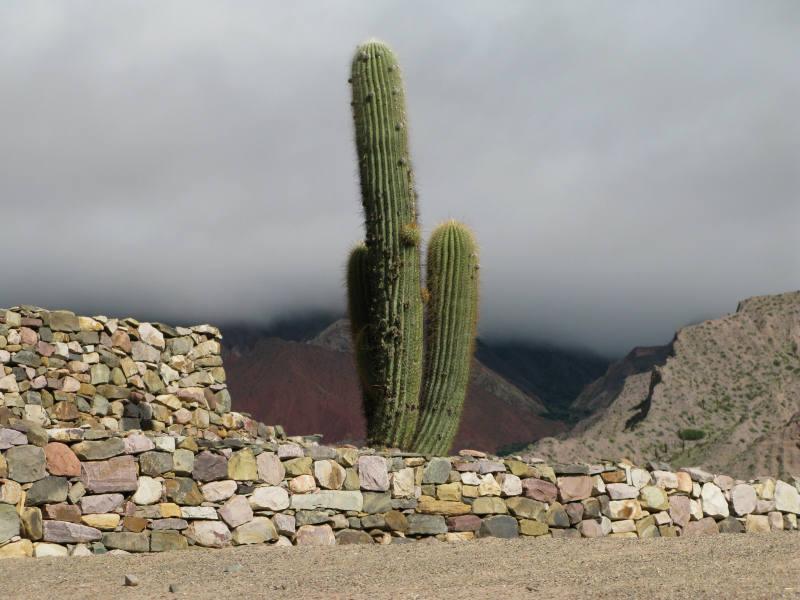Flora und Fauna, Salta, Argentinien