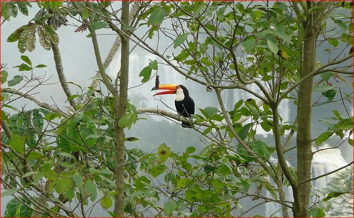 NP Iguazu brasil