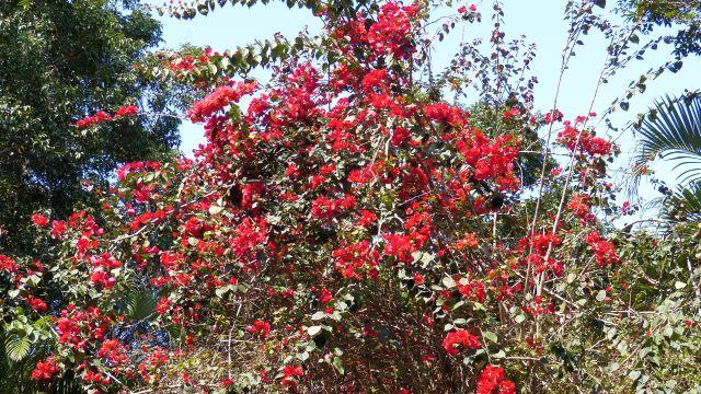 Pflanzen auf der Ilha do Mel
