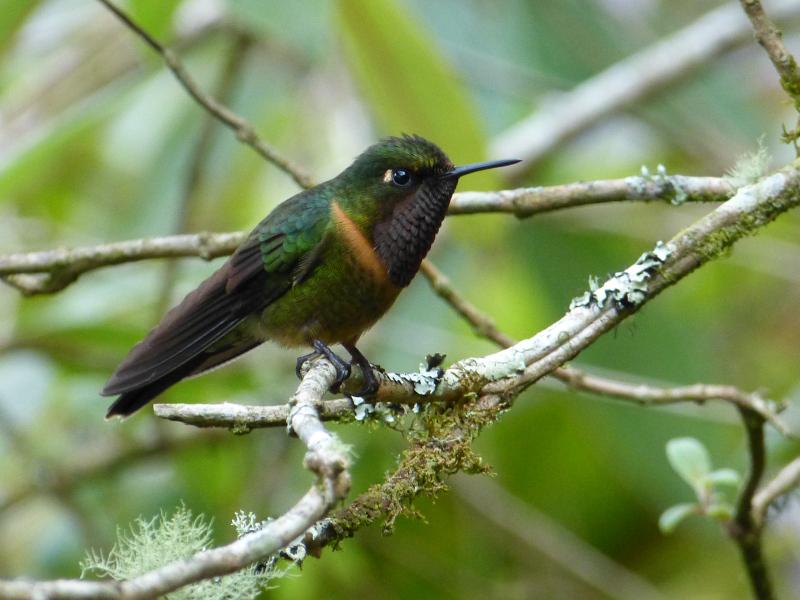 Flora und Fauna in Venezuela